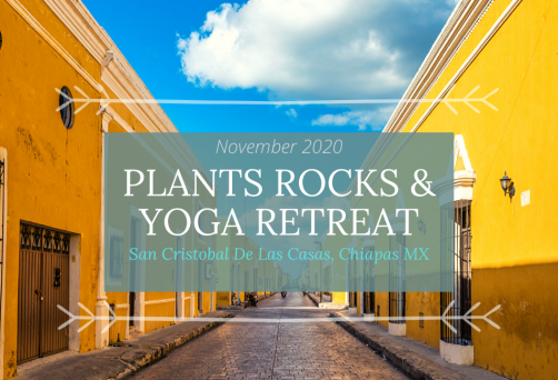 Plants, Rocks & Yoga